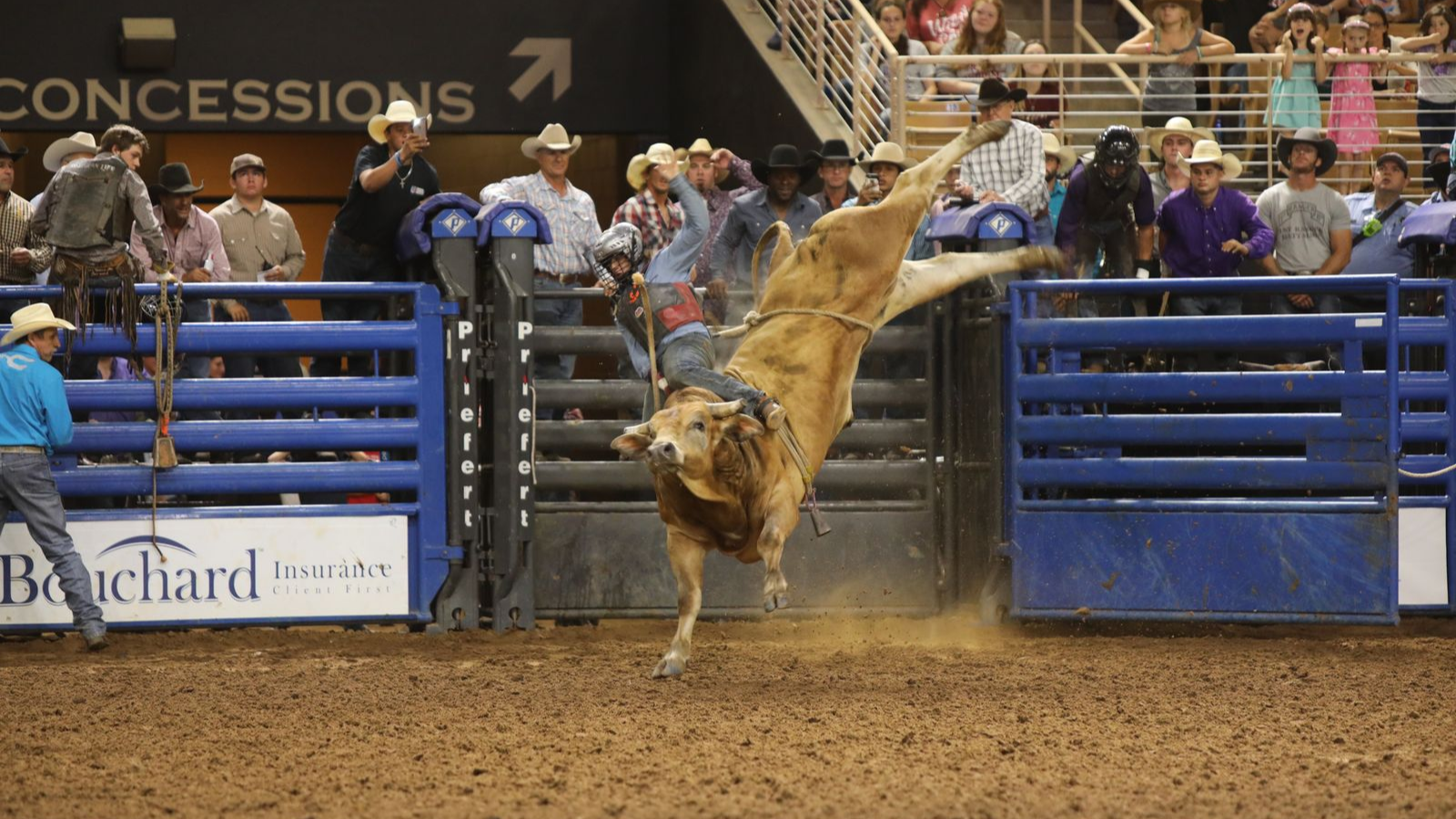 Photo for 9th Annual Monster Bulls on ViewStub